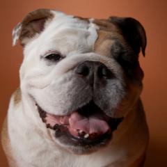 Cani e termoregolazione
