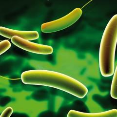 La flora intestinale può farci ingrassare